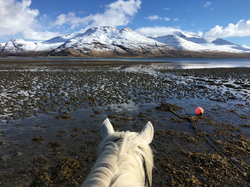Mull Pony Trekking